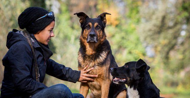 Instinct de Chien - éducation canine Montélimar