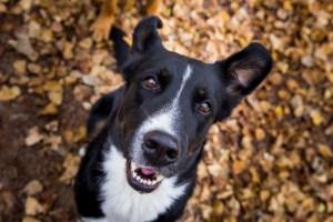 Instinct de chien - Maiko et Shogun - éducation canine Montélimar et alentours - éducation positive