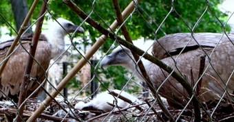 Gay-Vultures.jpg