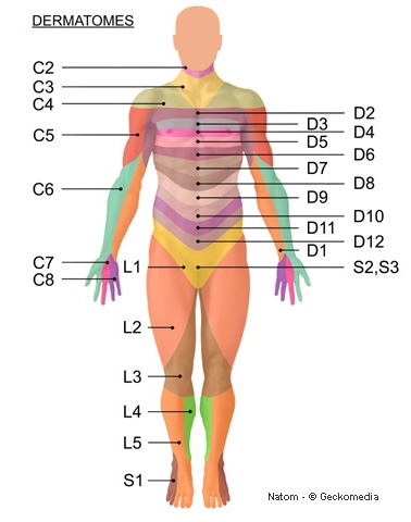 Dermatomes Formation Rebouteux