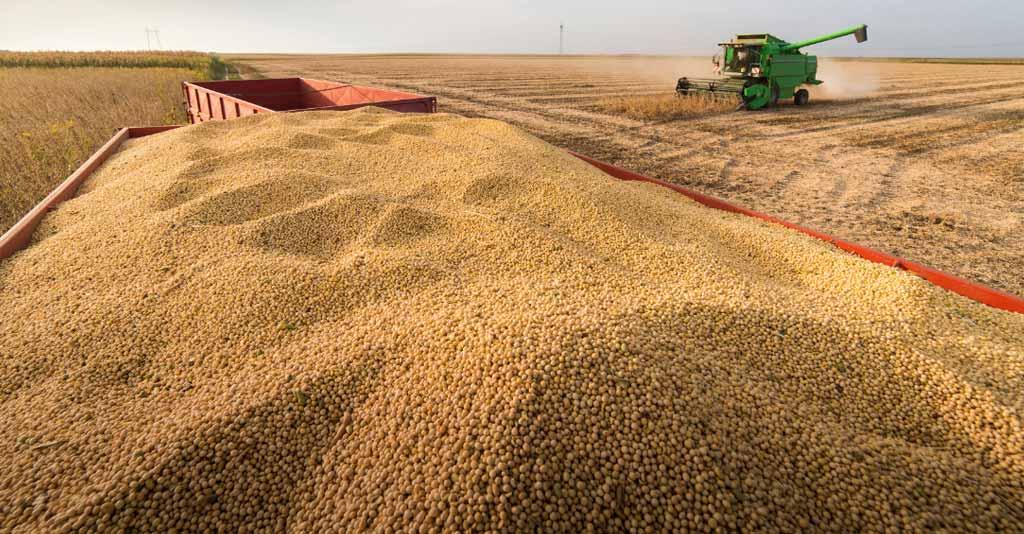 Como você pode evitar os principais tipos de perdas na colheita