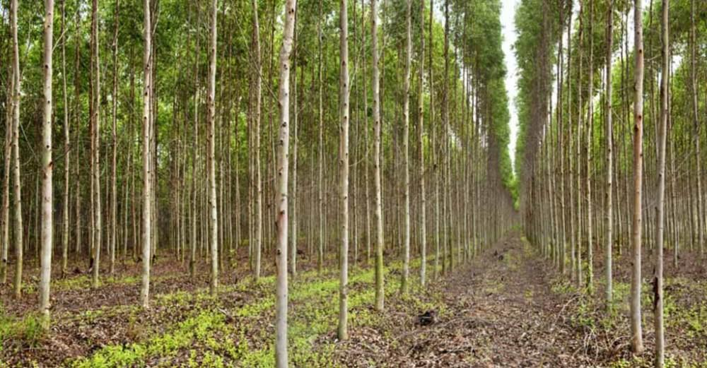 Reflorestamento: tudo que um profissional do Agro precisa saber