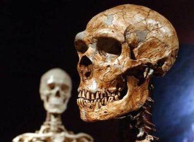 Um crânio de neandertal (direita), com outro de humano atual.