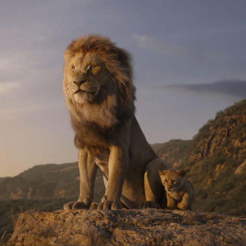 ¿Lo notaste? Esta es la única escena real en 'El Rey León'