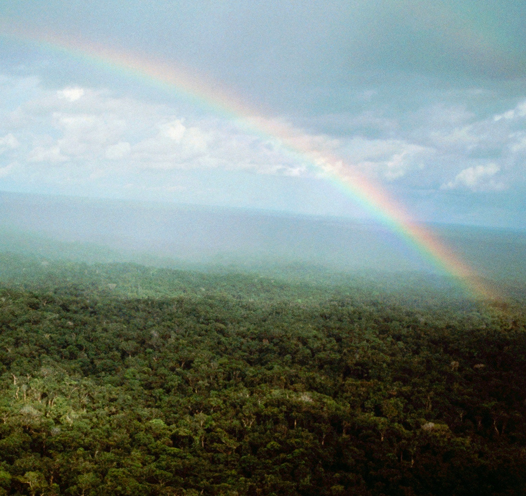 ¿Quieres ayudar al Amazonas? Te decimos cómo lograrlo