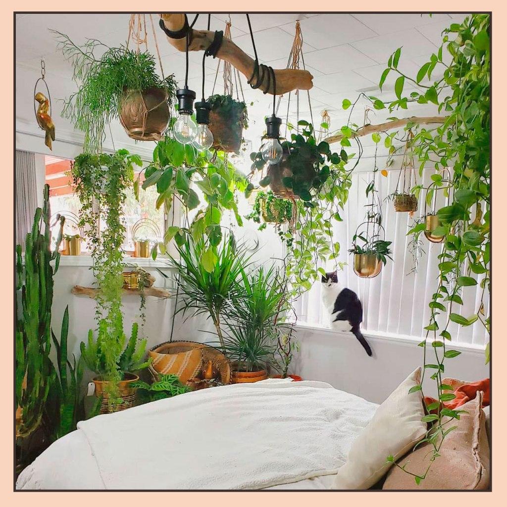Si amas las plantas tienes que seguir estas cuentas de Instagram