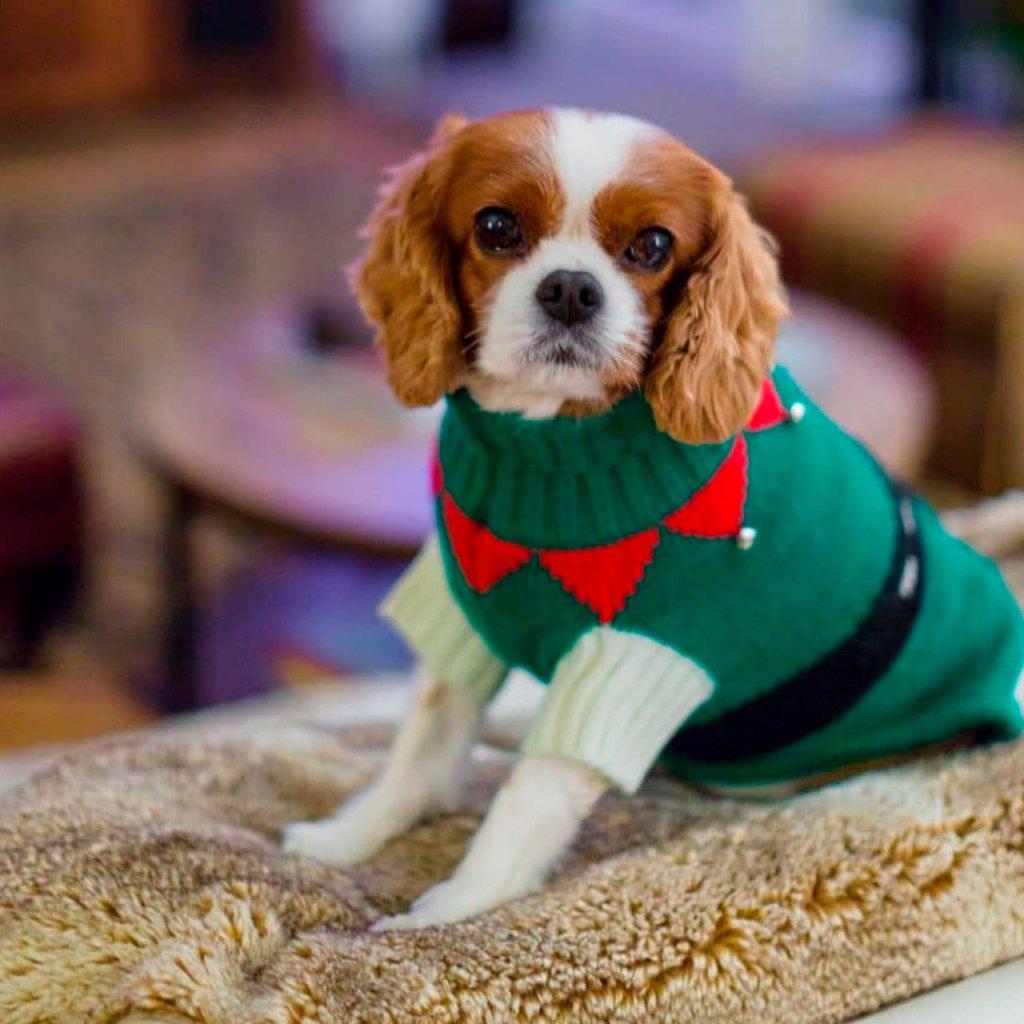 Lanzan la primera canción navideña creada exclusivamente para perros