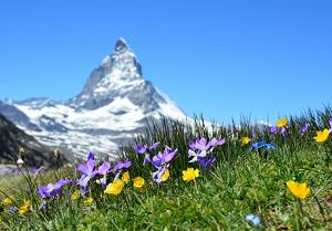 Insurance Companies in Switzerland