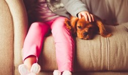 pet insurance growth in 2020