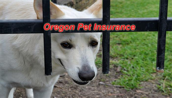 Oregon Pet Insurance