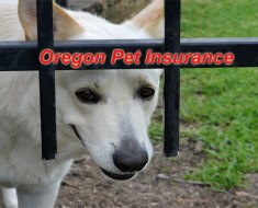 Oregon Pet Insurance
