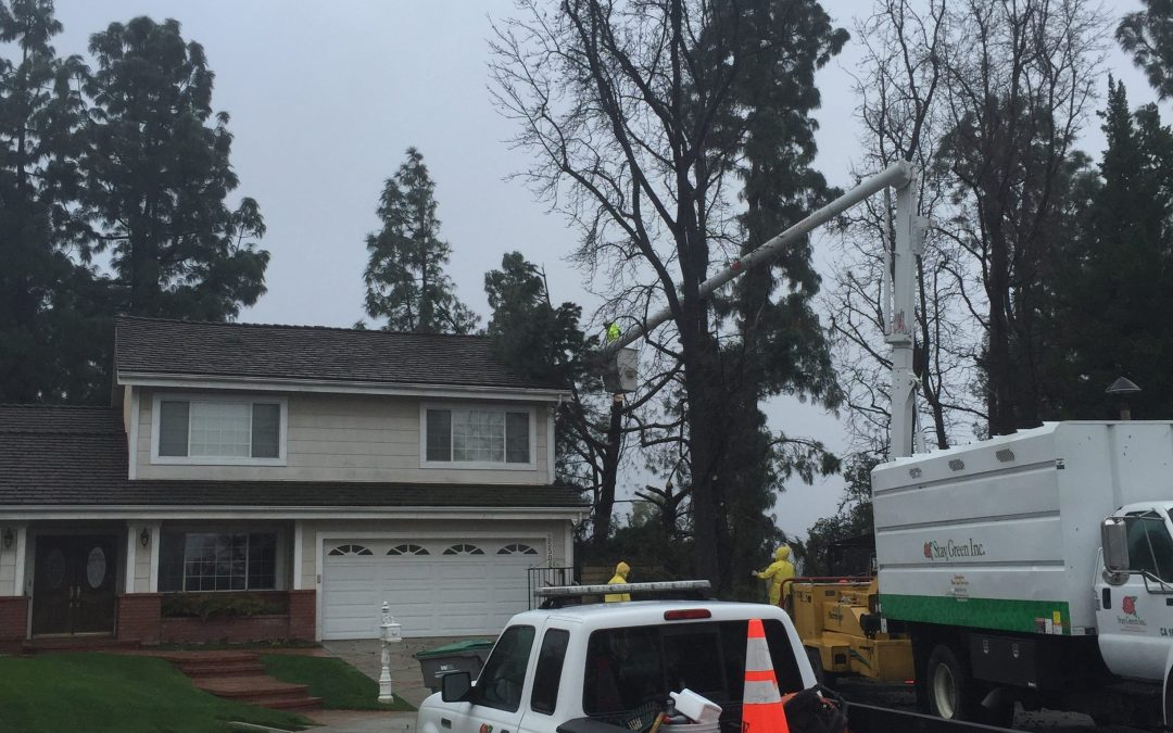 Falling Trees and Home Insurance – Are You Covered?