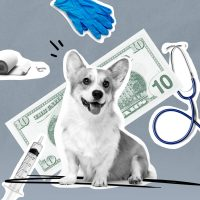 How Your Dog Can Affect Your Homeowners Insurance Rates