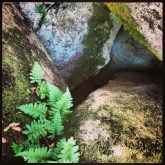 Ferns, moss and granite along the Pioneer Express Trail, Instagram