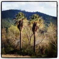 Palm trees mark a homestead somewhere along Whiskey Bar.