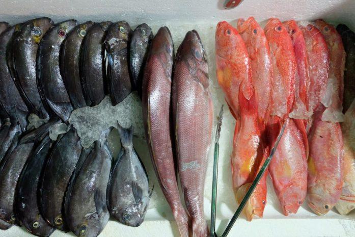 Ikan Laut Segar Manado