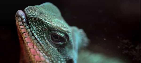 Zoo Kaszuby Egzotyczne atrakcje na kaszubach