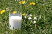 napoje roślinne sklep tobio
