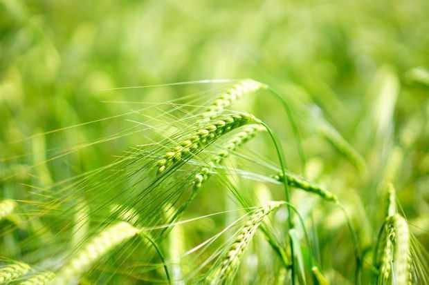 Trawy jęczmienne, pszeniczne bio sklep online