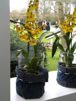 Yellow spray orchids (not a technical term) in pot covers made from recycled jeans