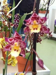 Dark pink blotchy yellow-centred orchid flower arrangement