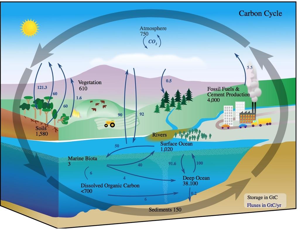 Worksheet Carbon Cycle Diagram Worksheet Worksheet Fun