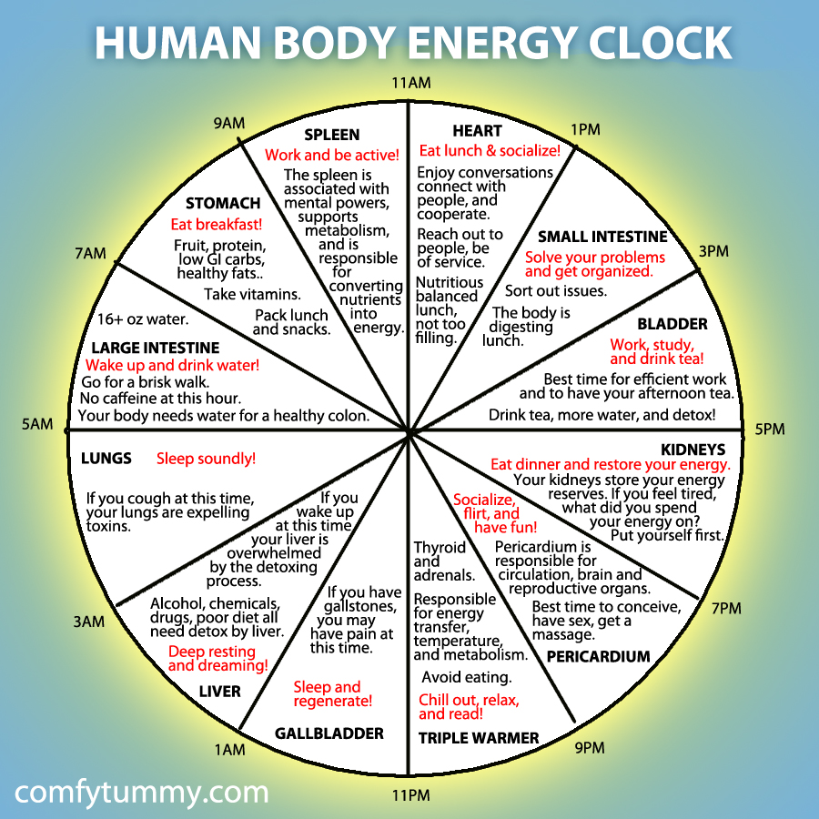 This image has an empty alt attribute; its file name is human-body-energy-clock.jpg