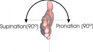 Pronation-and-Supination-500x284-300x170
