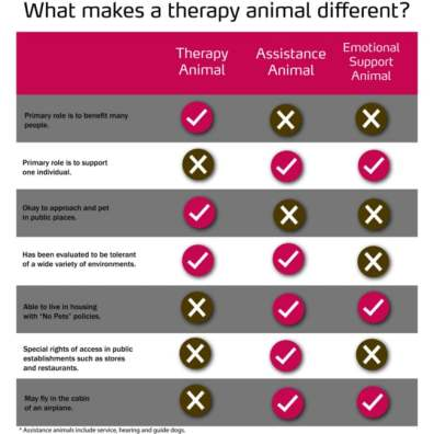 animal-assisted-therapy-integrative-therapy-nashville