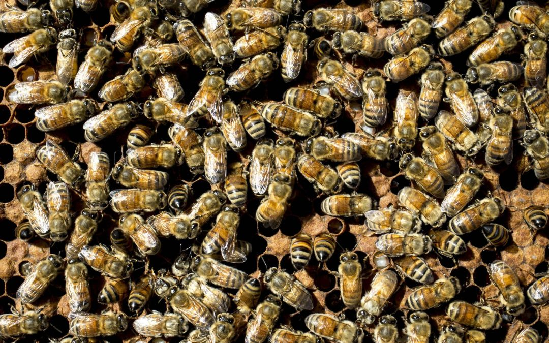 Bee swarm injures 2 in Phoenix