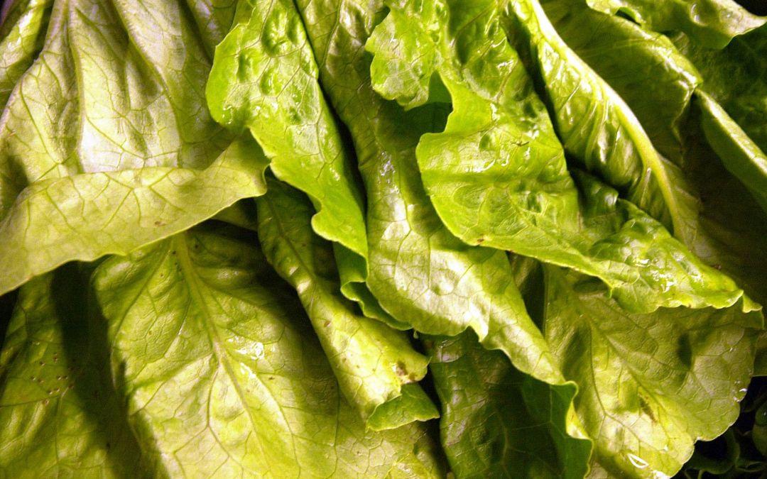 Yuma lettuce no longer a threat as E. coli cases climb to 172