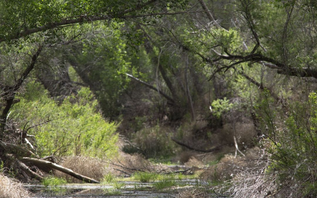 Arizona court ruling clears way for development near San Pedro River