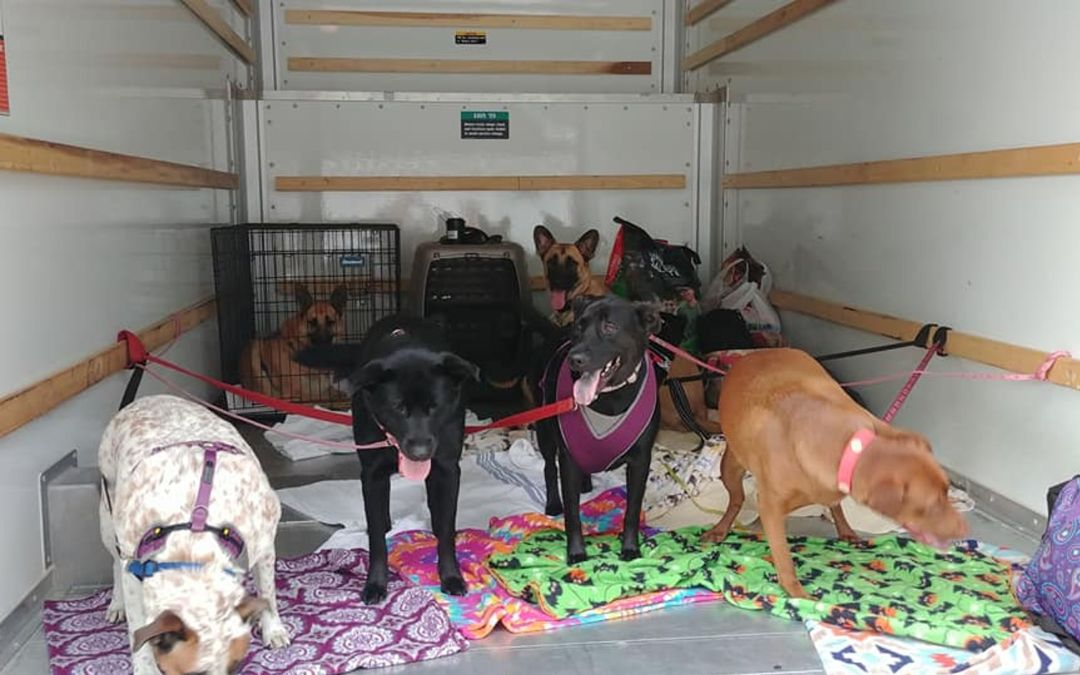 Strangers help North Carolina woman, 7 dogs