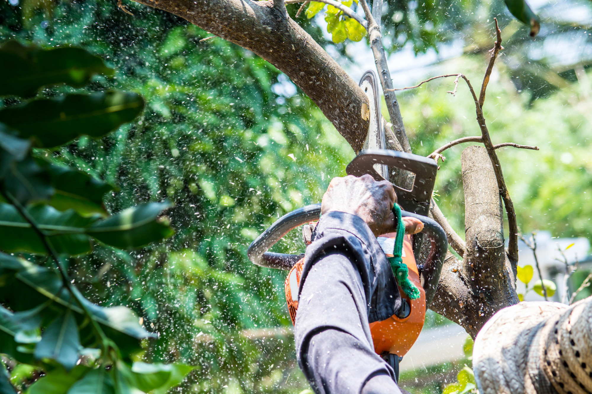 9 Questions to Ask Before Hiring a Tree Removal Company