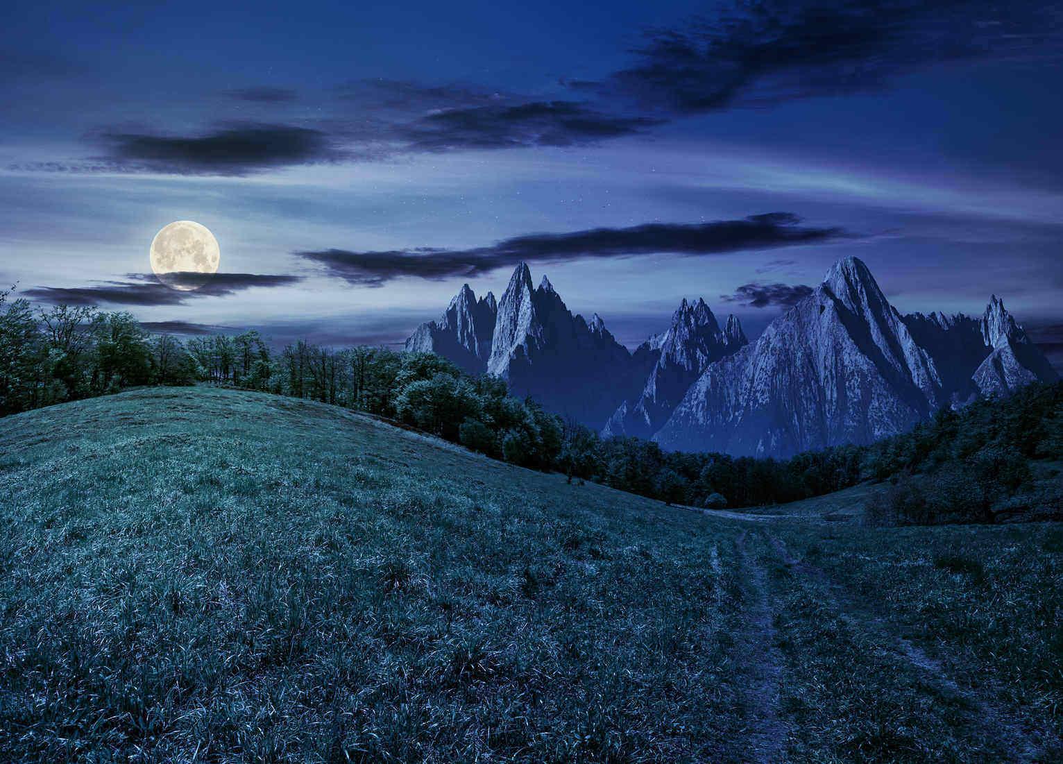 forest on grassy hillside in the Tatras