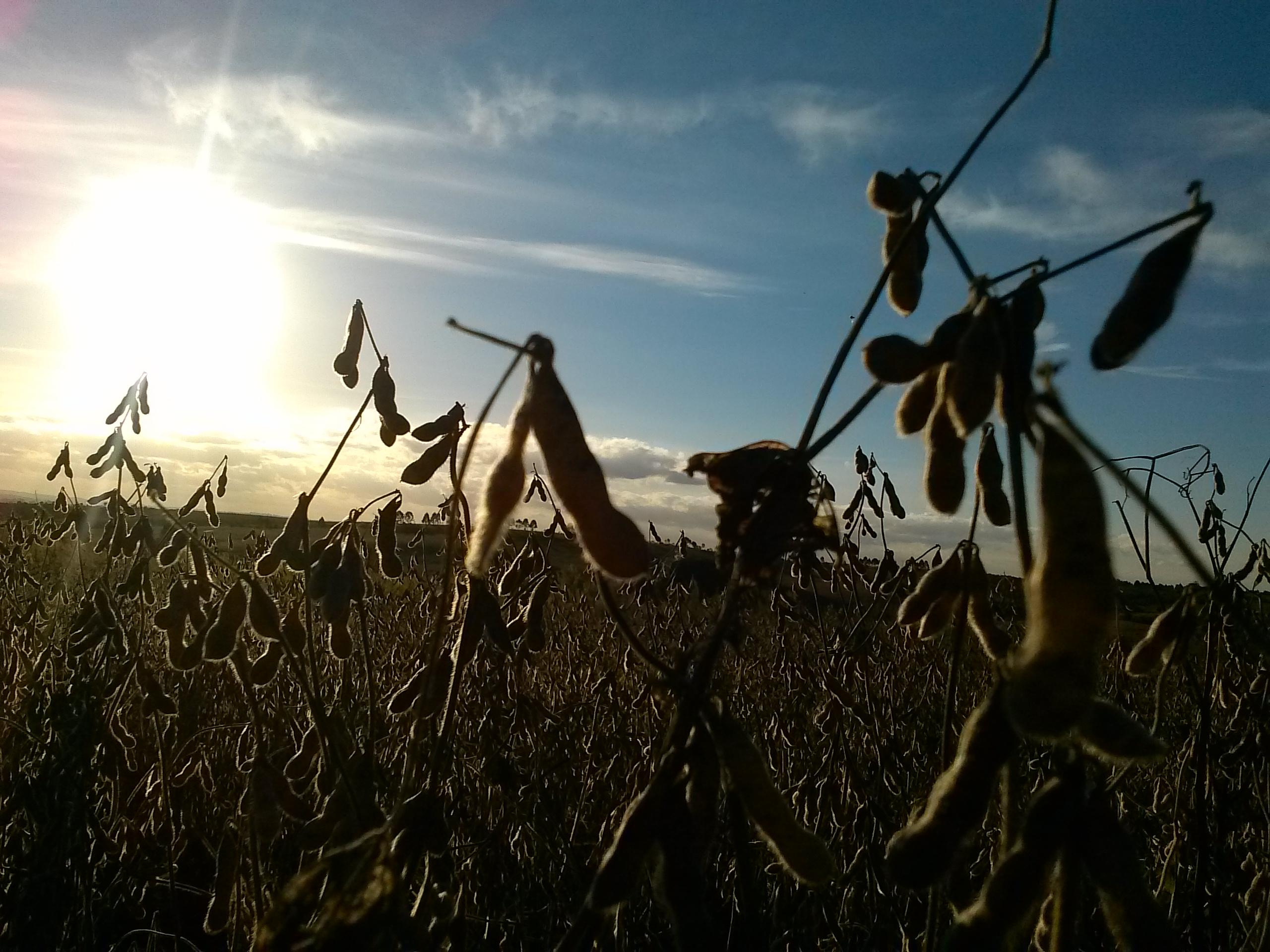 Colheita da soja vai chegando ao fim no Paraná