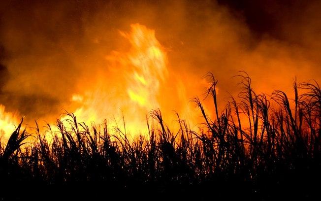 Burn, baby burn – Os malefícios dos incêndios criminosos para os canaviais.