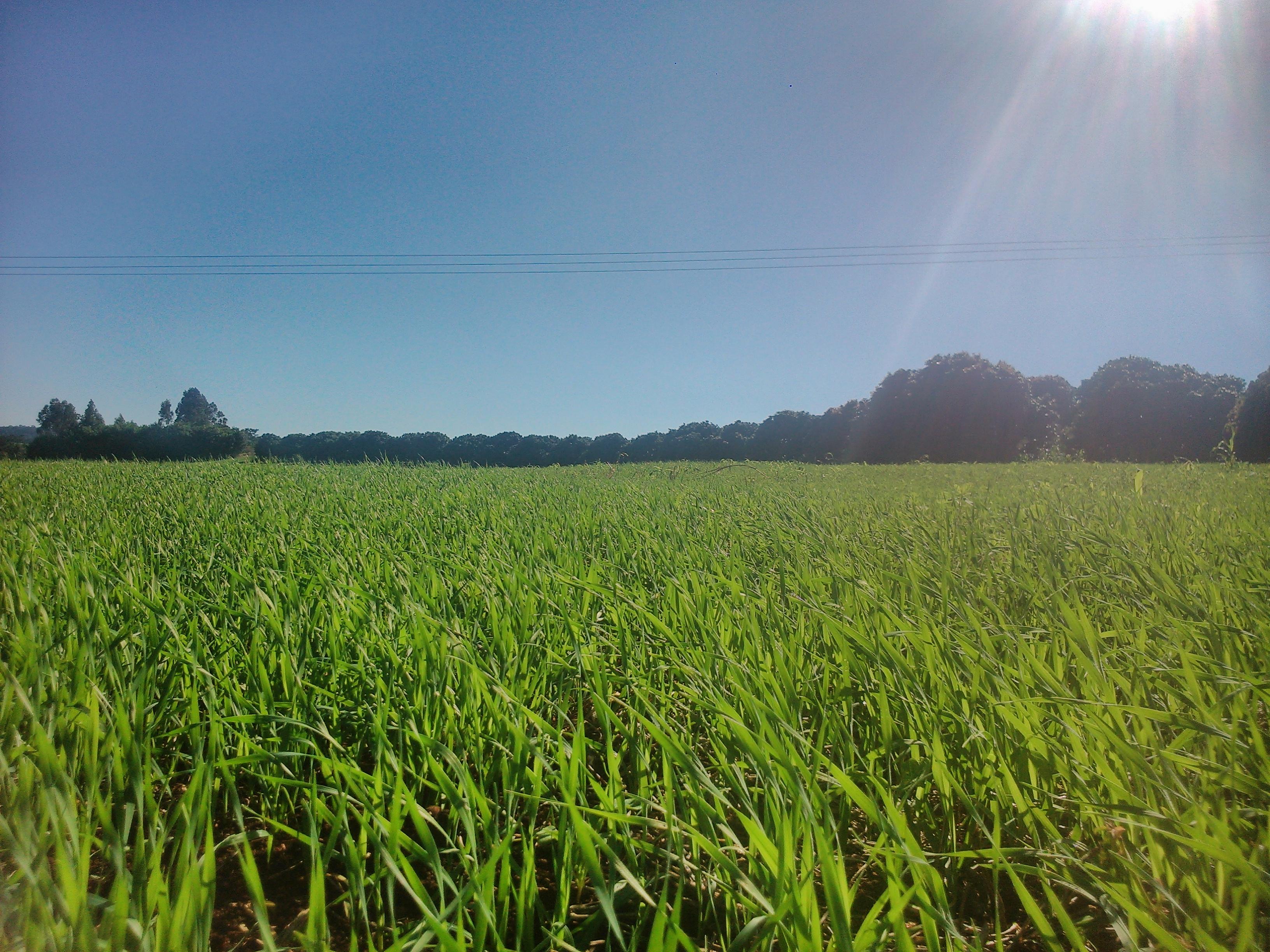 5 fatos que a agricultura vai lembrar de 2014