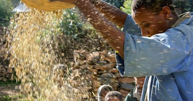 Como alimentar mais pessoas somente consertando nossas fazendas