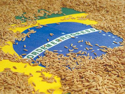 Brasil e arroz