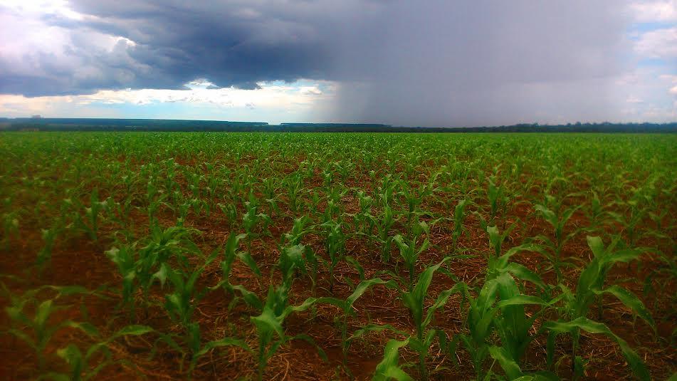 Colheita de soja em Lucas do Rio Verde vai chegando ao fim