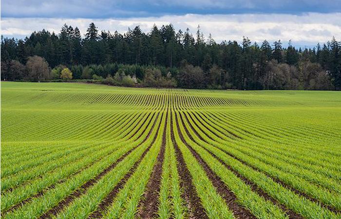 Qual a diferença entre Agronomia e Engenharia Agrícola?