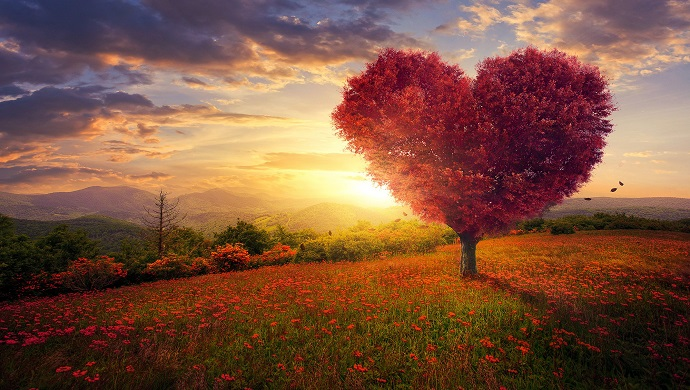 The Faith of a Muslim: Attaching the Heart to Allah
