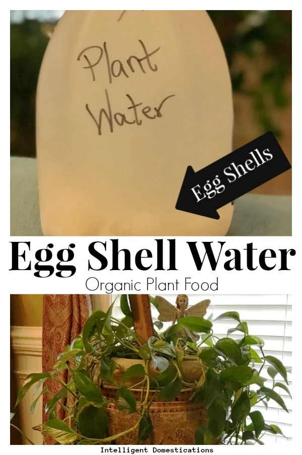 How to make egg shell water organic plant food for your house plants. Eggshell water for plants. Reuse egg shells to make organic water for your plants. #organichouseplantfood #organicplantfood