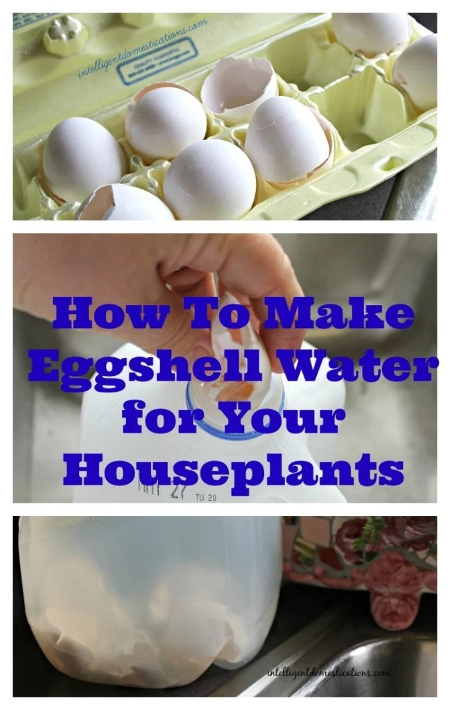 How To Make Eggshell Water for Your Houseplants