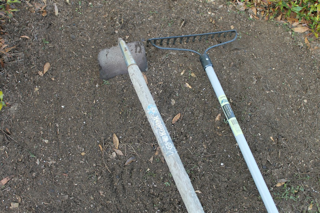 Prepare the soil with rake and hoe.