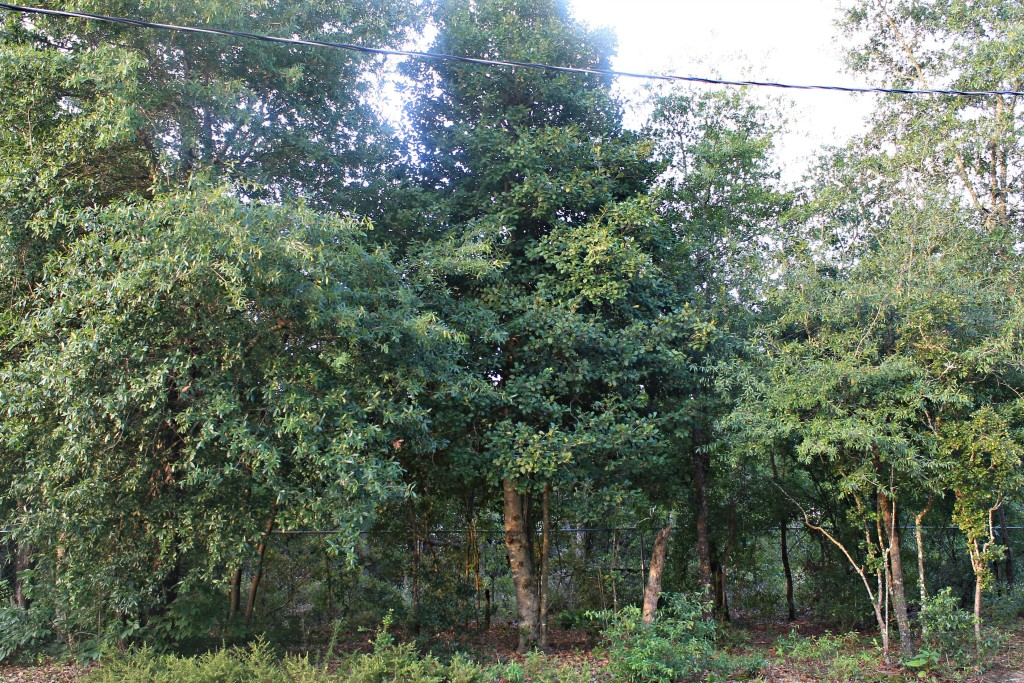 Wooded area where the squirrels build nests in the trees