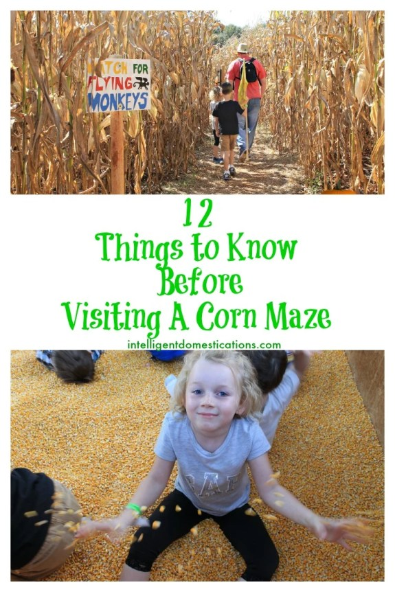 12 Things to know before visiting a corn maze.intelligentdomestications.com