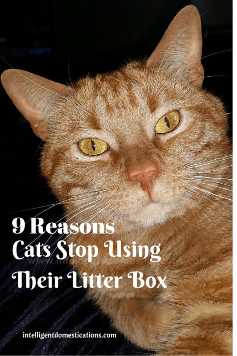 9 ReasonsCats StopUsing Their Litter Box (1)