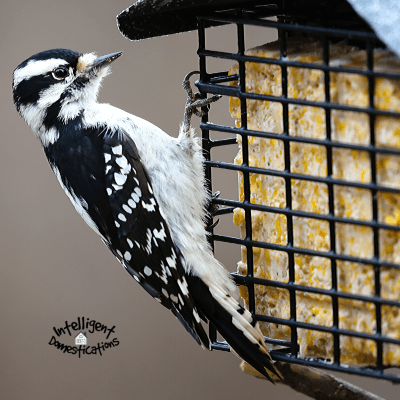 How To Make Homemade Bird Suet